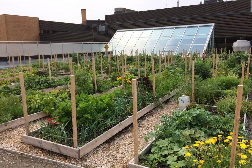 Jardin sur toit | Cultive ta ville